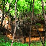 陕西黄陵国家森林公园