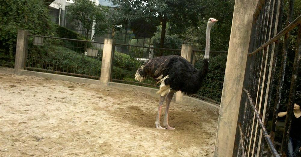 温州动物园成人票
