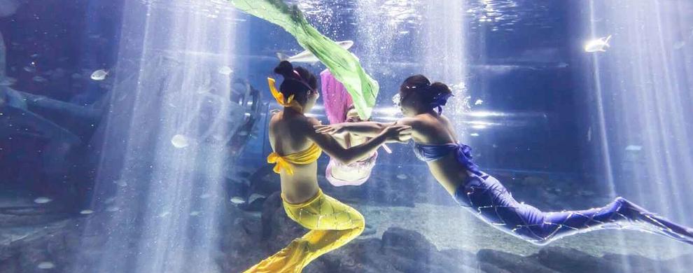 美人鱼之舞