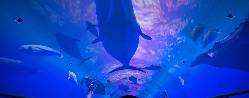 魔幻•深海传奇