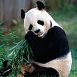 京城水系皇家御河游船单程票(含动物园、熊猫馆)