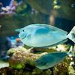 曼利海洋生物保护区