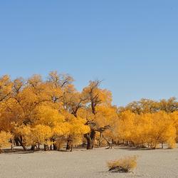大漠胡杨林旅游区