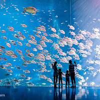 珠海长隆国际海洋度假区