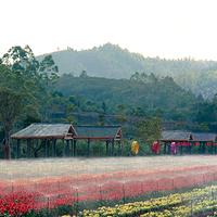 平远曼佗山庄山茶花主题生态园