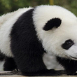 北京野生动物园成人票