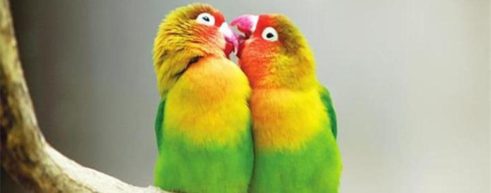 鸟类表演馆