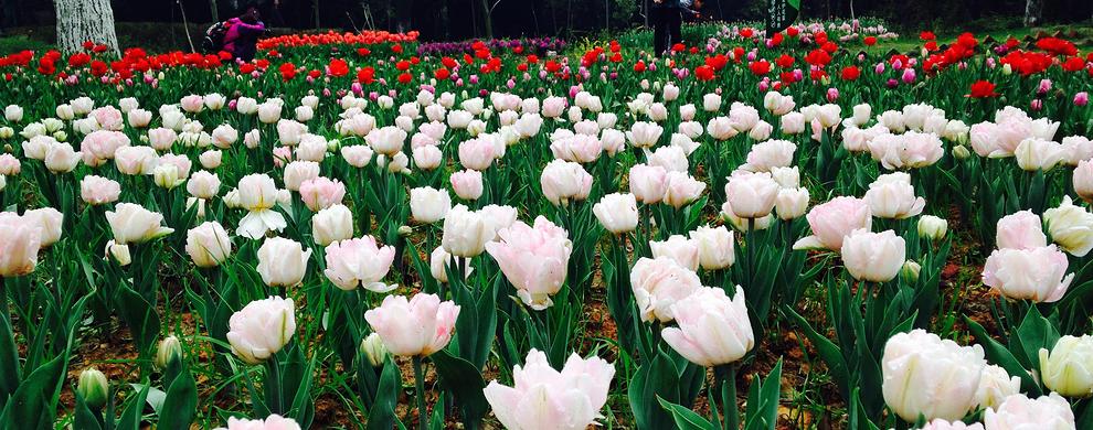 四季花展,鲜花始终绽放