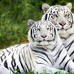 杭州野生动物园