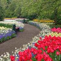 荷兰库肯霍夫花园
