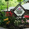 新加坡国家胡姬花园