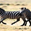八达岭野生动物园成人票