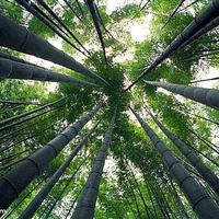 竹子博览园