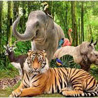 SAFARI野生动物园