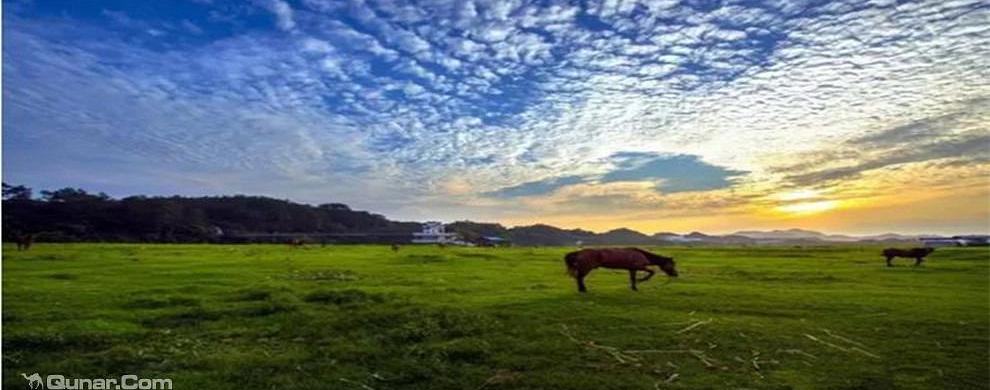 江南小草原