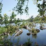 罗东林业文化园