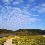 贺州黄姚仙女湖花海