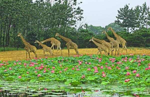 秦皇岛野生动物园双人自驾游票(含小型车票1张)