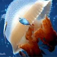 南海洋水母王国