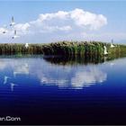 纳林湖景区