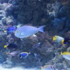 丹麦国立水族馆