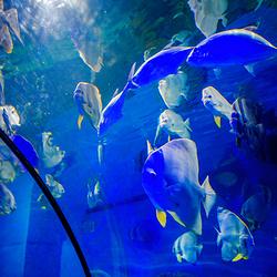 重庆欢乐海底世界