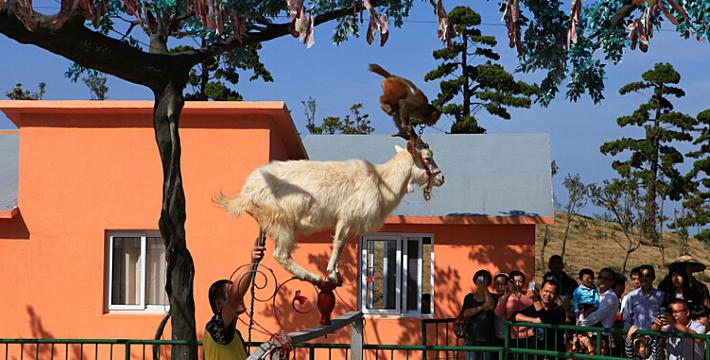 朝着世界沿海湿地第一动物园的宏伟目标迈进 位      置:江苏省盐城