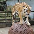 京明温泉度假村动物园