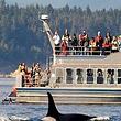 洛杉矶出海观鲸精品之旅