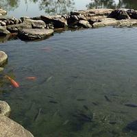 花莲立川渔场