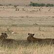 马赛马拉国家野生动物保护区