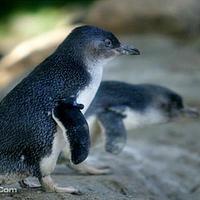 企鹅大游行