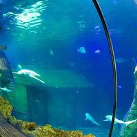 慕尼黑海洋生命水族馆