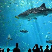 伦敦水族馆