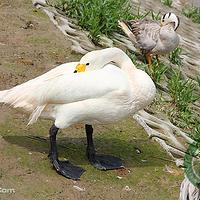 大丰港动物园