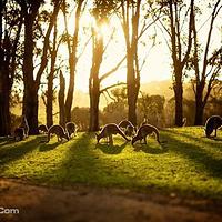 菲利普岛野生动物园