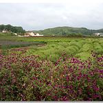 楚天香谷芳香文化博览园