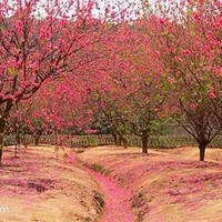 桃花谷景区
