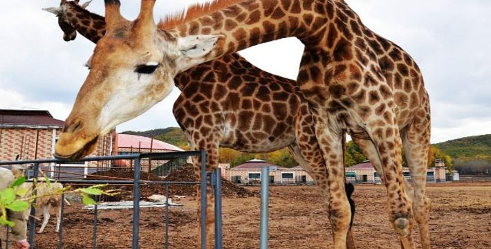 北方森林动物园门票_哈尔滨北方森林动物园门票,哈尔滨北方森林动物园门票预订