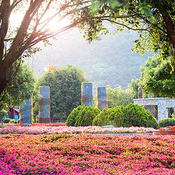 东南花都花博园
