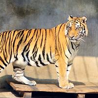 保定动物园