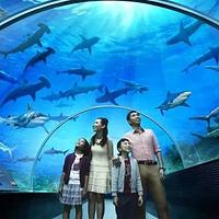 杭州江和美海洋公园
