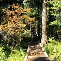 九寨沟原始森林