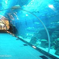 迪拜海底世界