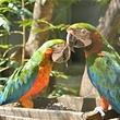 卡塞拉飞鸟公园