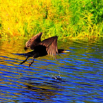 乌伊岭湿地公园