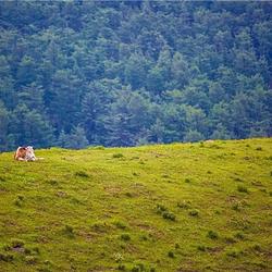 庞泉沟国家森林公园