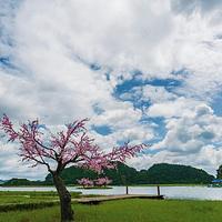 菜花箐苗族生态旅游村