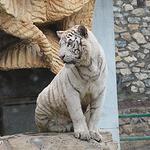 盘州动物园