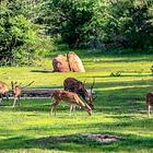 乌达瓦拉维国家公园